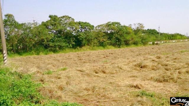 大坡國中旁農地
