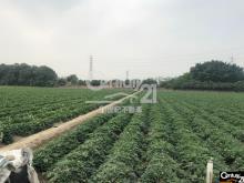 買屋、賣屋、房屋買賣都找21世紀不動產– 永康科技園區旁農地一–台南市永康區永康科技園區旁農地一