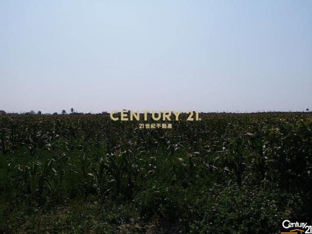 七股415便宜美農地