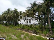 買屋、賣屋、房屋買賣都找21世紀不動產– 阿蓮椰林休閒農地–高雄市阿蓮區土庫段